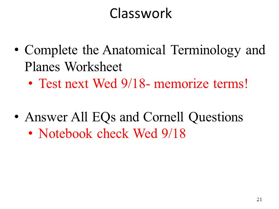 Classwork Complete the Anatomical Terminology and Planes Worksheet