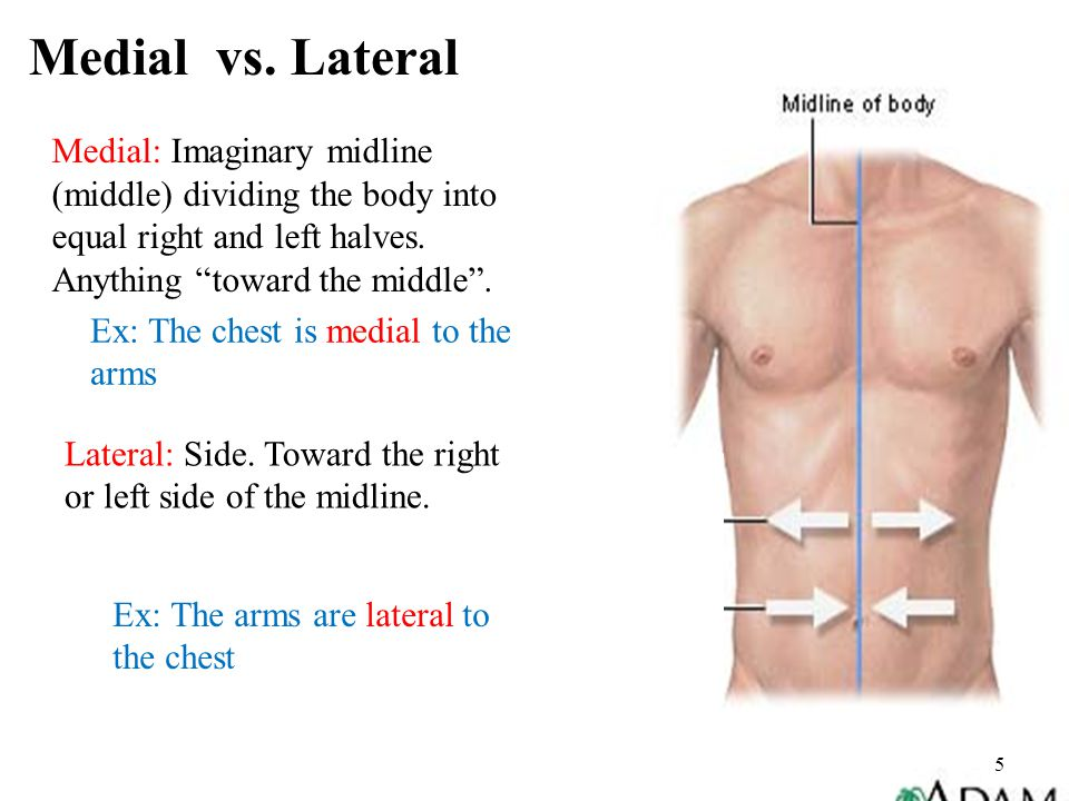 Medial vs. Lateral Medial: Imaginary midline (middle) dividing the body into equal right and left halves. Anything toward the middle .