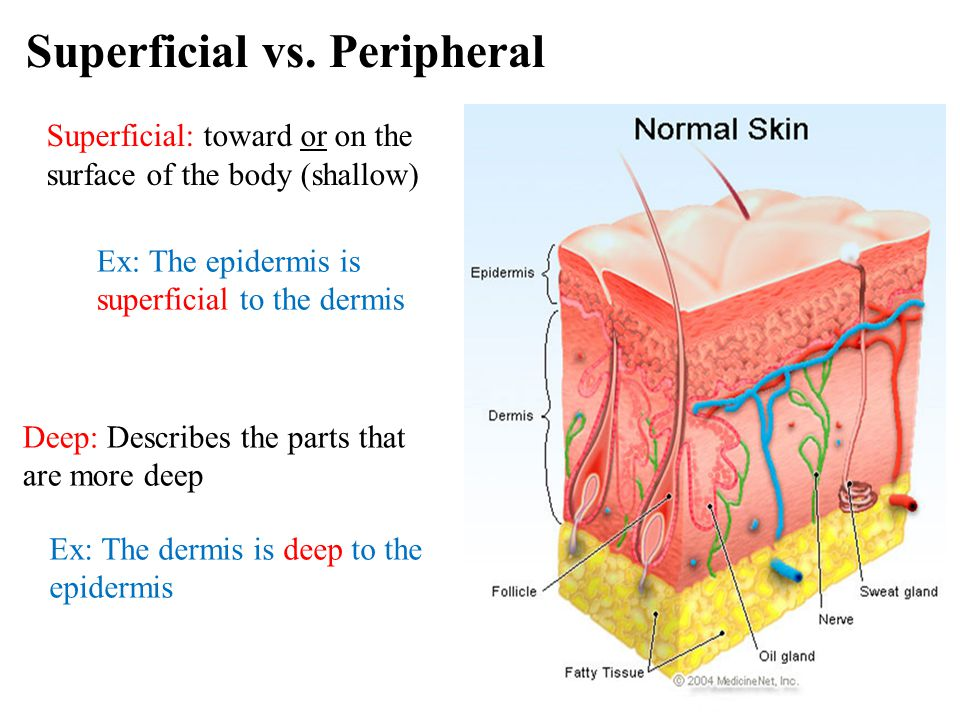 Superficial vs. Peripheral