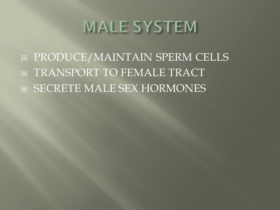 MALE SYSTEM PRODUCE/MAINTAIN SPERM CELLS TRANSPORT TO FEMALE TRACT