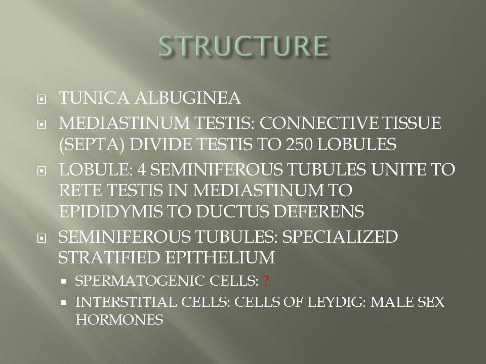 STRUCTURE TUNICA ALBUGINEA