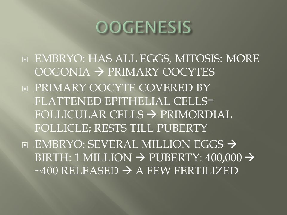 OOGENESIS EMBRYO: HAS ALL EGGS, MITOSIS: MORE OOGONIA  PRIMARY OOCYTES.
