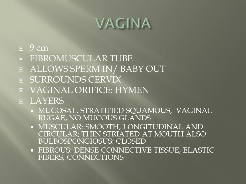 VAGINA 9 cm FIBROMUSCULAR TUBE ALLOWS SPERM IN/ BABY OUT
