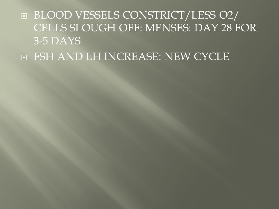 BLOOD VESSELS CONSTRICT/LESS O2/ CELLS SLOUGH OFF: MENSES: DAY 28 FOR 3-5 DAYS