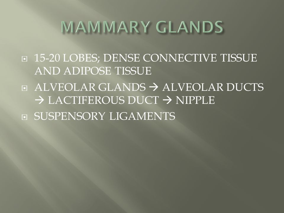 MAMMARY GLANDS 15-20 LOBES; DENSE CONNECTIVE TISSUE AND ADIPOSE TISSUE