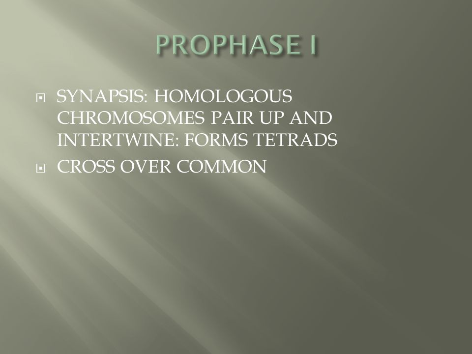 PROPHASE I SYNAPSIS: HOMOLOGOUS CHROMOSOMES PAIR UP AND INTERTWINE: FORMS TETRADS CROSS OVER COMMON