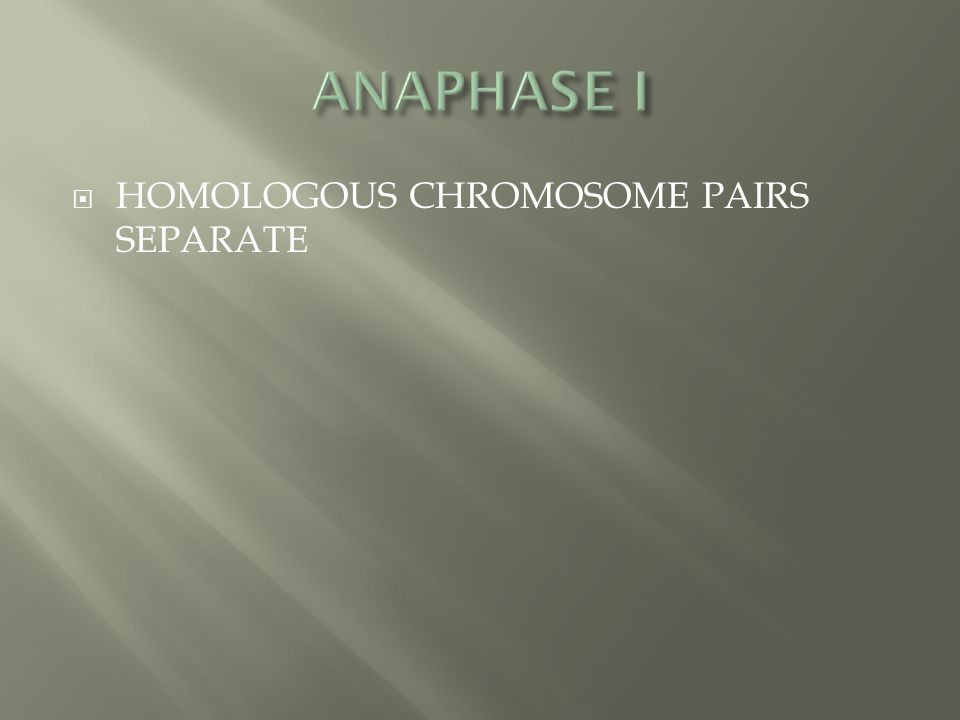 ANAPHASE I HOMOLOGOUS CHROMOSOME PAIRS SEPARATE