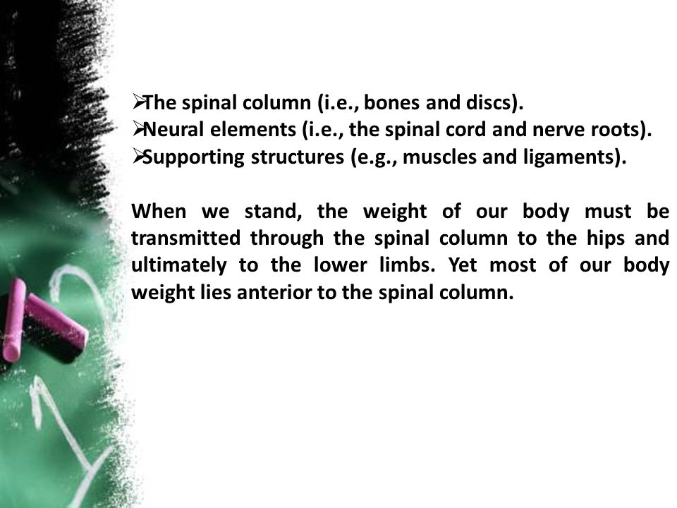 The spinal column (i.e., bones and discs).