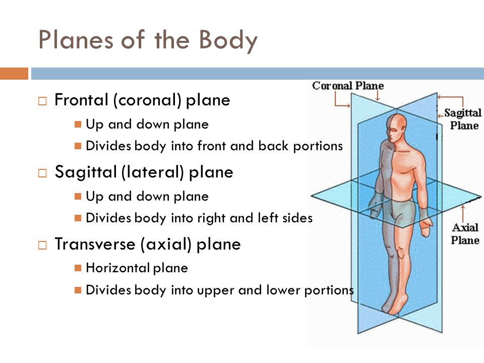 Planes of the Body Frontal (coronal) plane Sagittal (lateral) plane