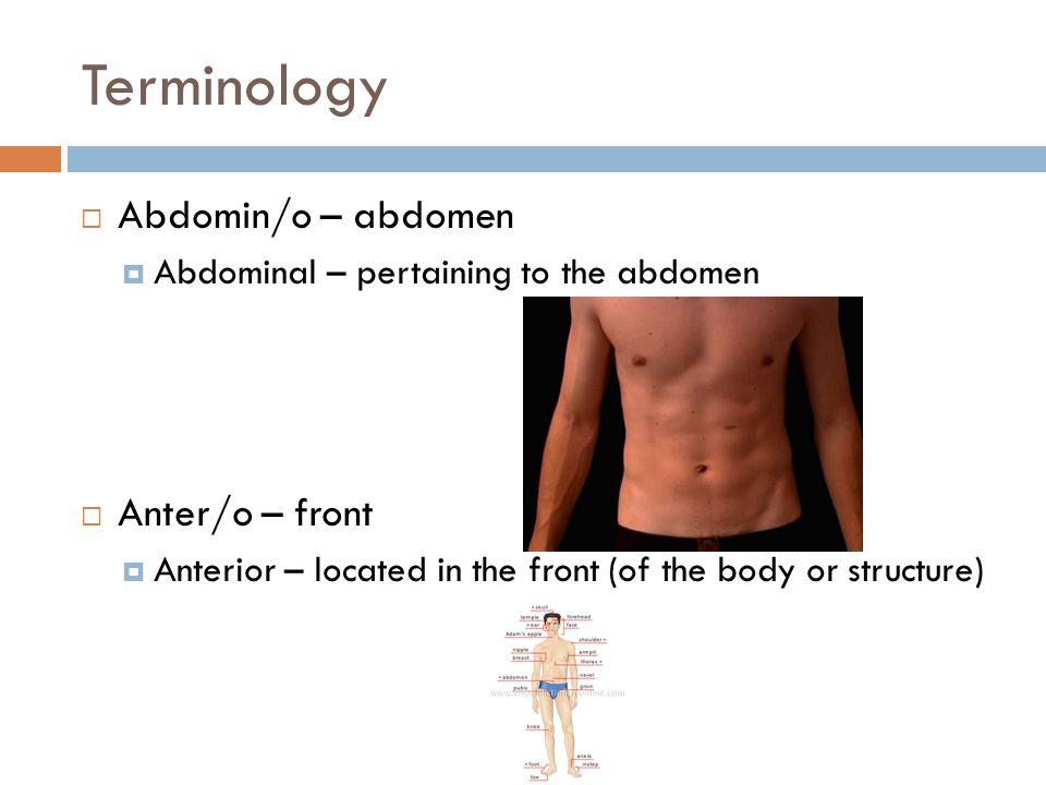 Terminology Abdomin/o – abdomen Anter/o – front