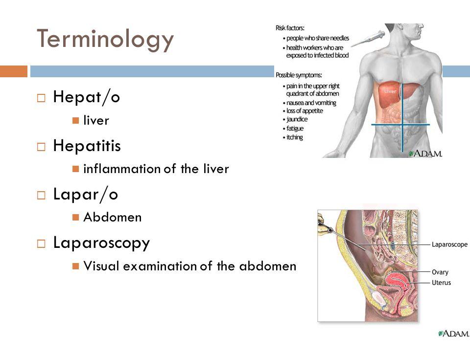 Terminology Hepat/o Hepatitis Lapar/o Laparoscopy liver