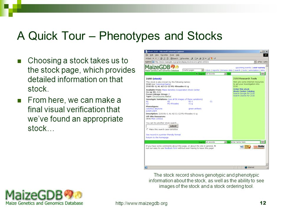 A Quick Tour – Phenotypes and Stocks