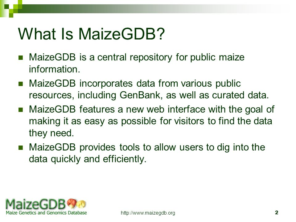 What Is MaizeGDB MaizeGDB is a central repository for public maize information.