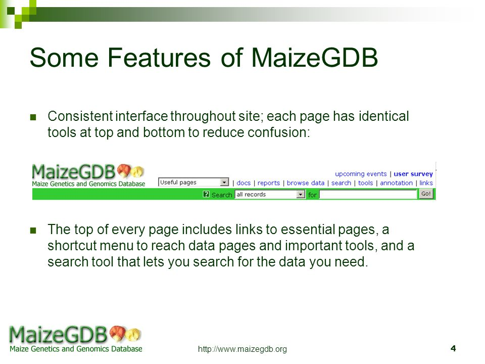 Some Features of MaizeGDB