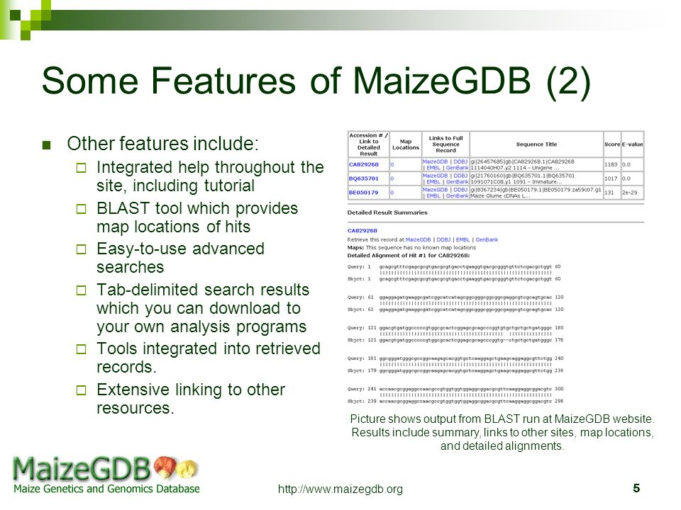 Some Features of MaizeGDB (2)