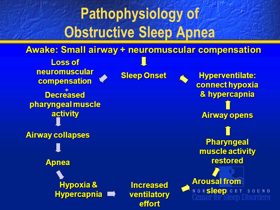 Pathophysiology of Obstructive Sleep Apnea