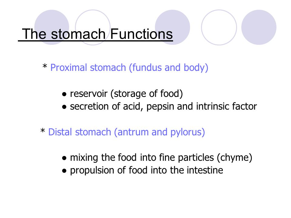 The stomach Functions * Proximal stomach (fundus and body)