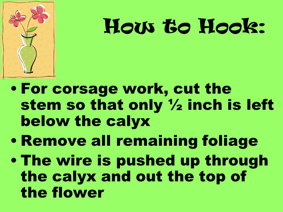 How to Hook: For corsage work, cut the stem so that only ½ inch is left below the calyx. Remove all remaining foliage.