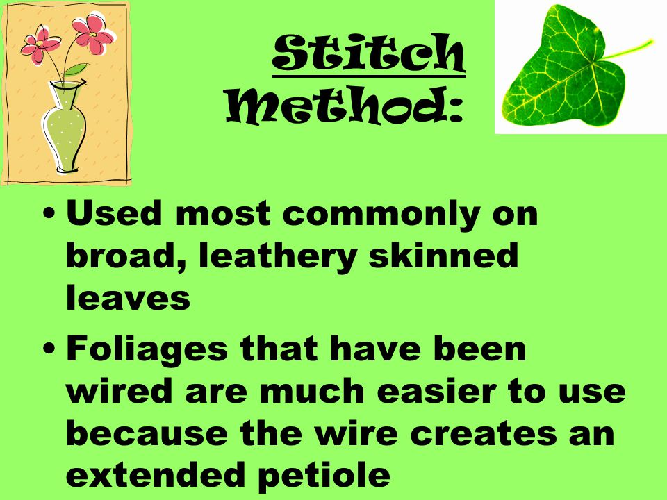 Stitch Method: Used most commonly on broad, leathery skinned leaves