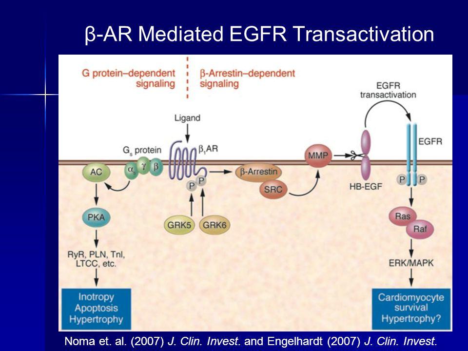 β-AR Mediated EGFR Transactivation