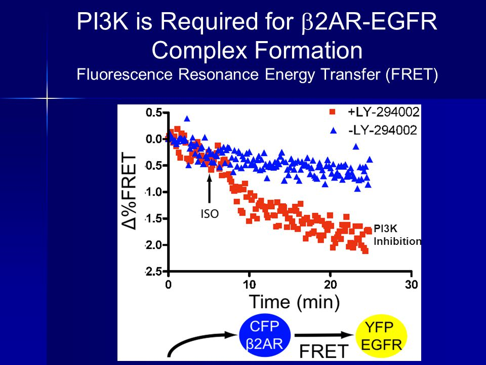 PI3K is Required for 2AR-EGFR Complex Formation Fluorescence Resonance Energy Transfer (FRET)