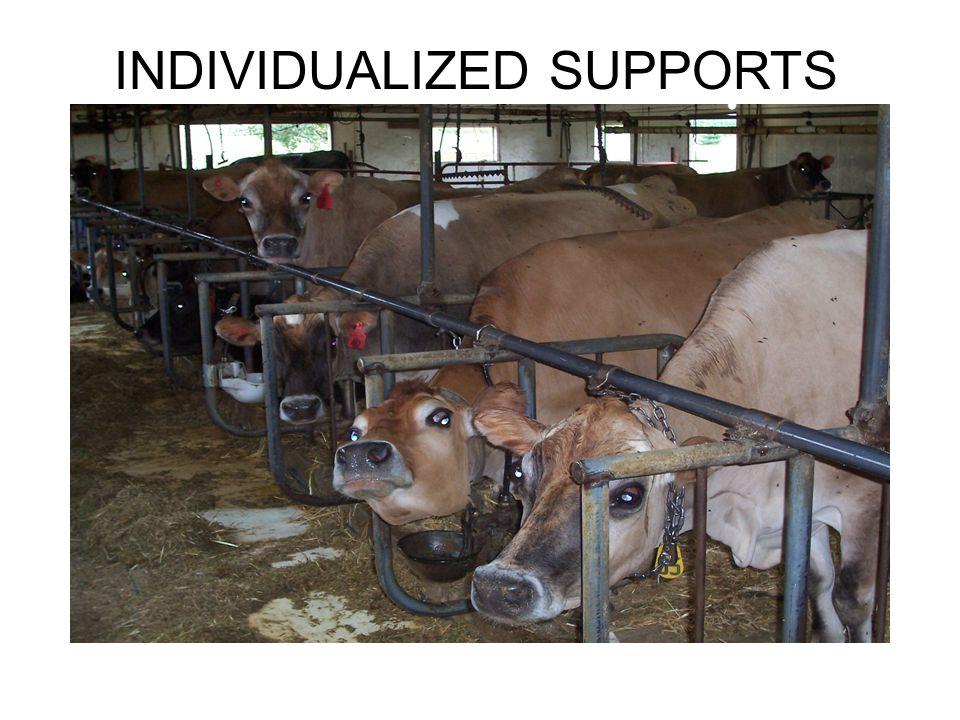 INDIVIDUALIZED SUPPORTS