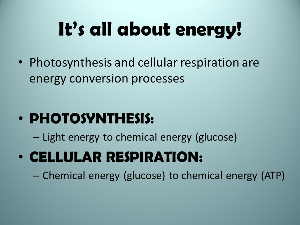 It's all about energy! PHOTOSYNTHESIS: CELLULAR RESPIRATION: