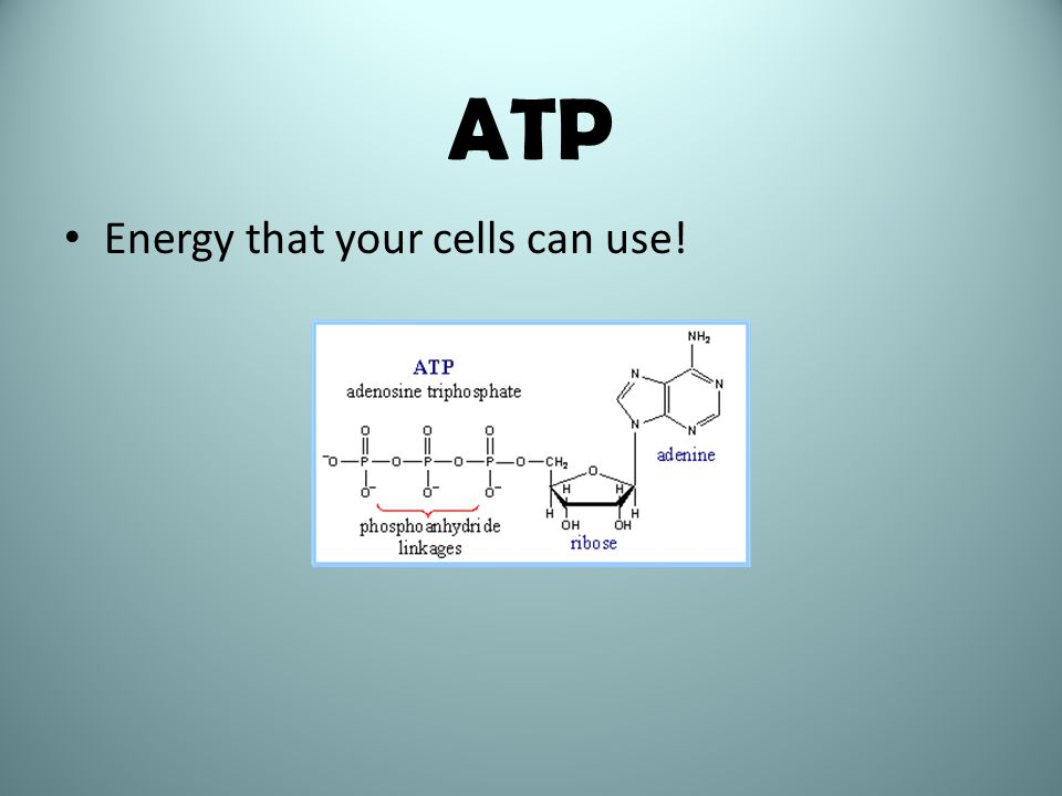 ATP Energy that your cells can use!