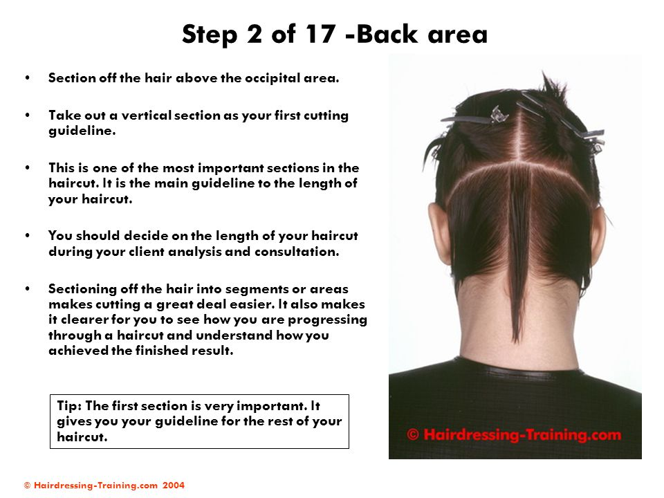 Step 2 of 17 -Back area Section off the hair above the occipital area.