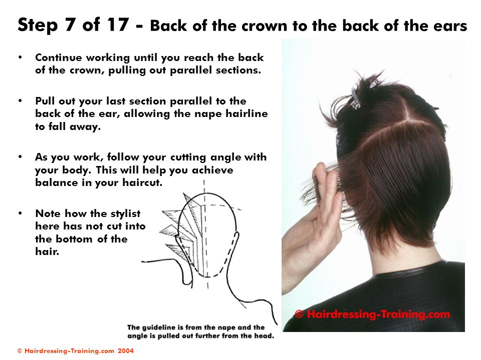 Step 7 of 17 - Back of the crown to the back of the ears