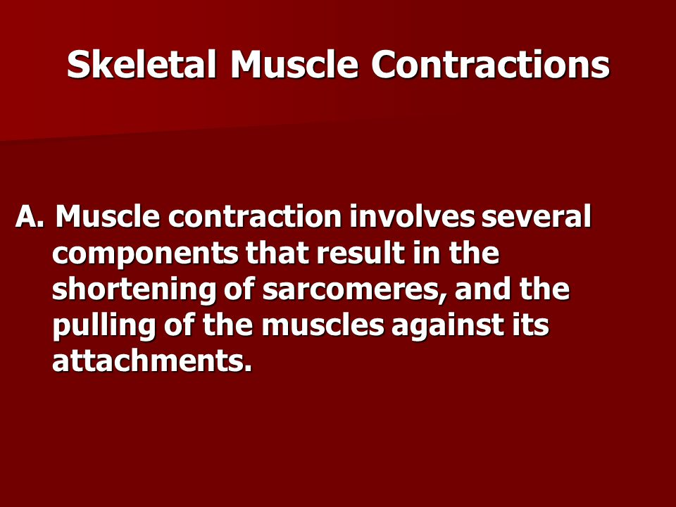 Skeletal Muscle Contractions