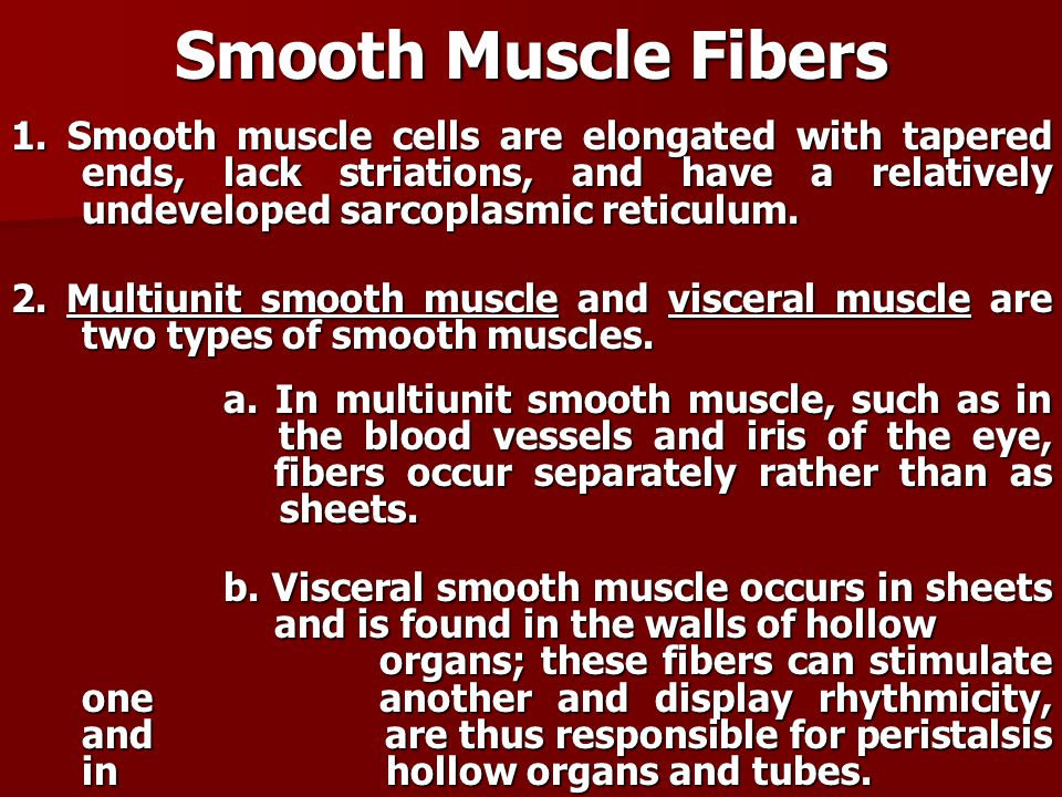 Smooth Muscle Fibers