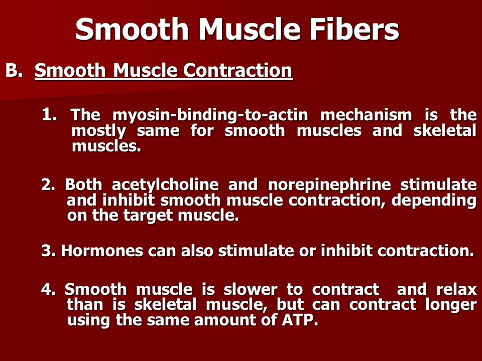 Smooth Muscle Fibers B. Smooth Muscle Contraction