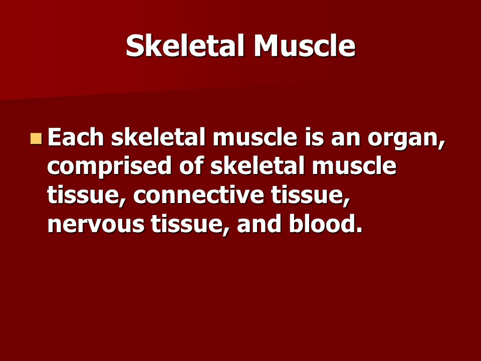 Skeletal Muscle Each skeletal muscle is an organ, comprised of skeletal muscle tissue, connective tissue, nervous tissue, and blood.