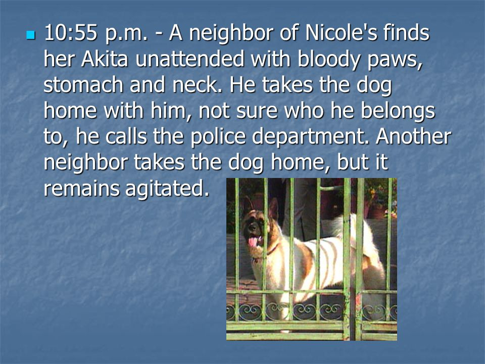 10:55 p.m. - A neighbor of Nicole s finds her Akita unattended with bloody paws, stomach and neck.
