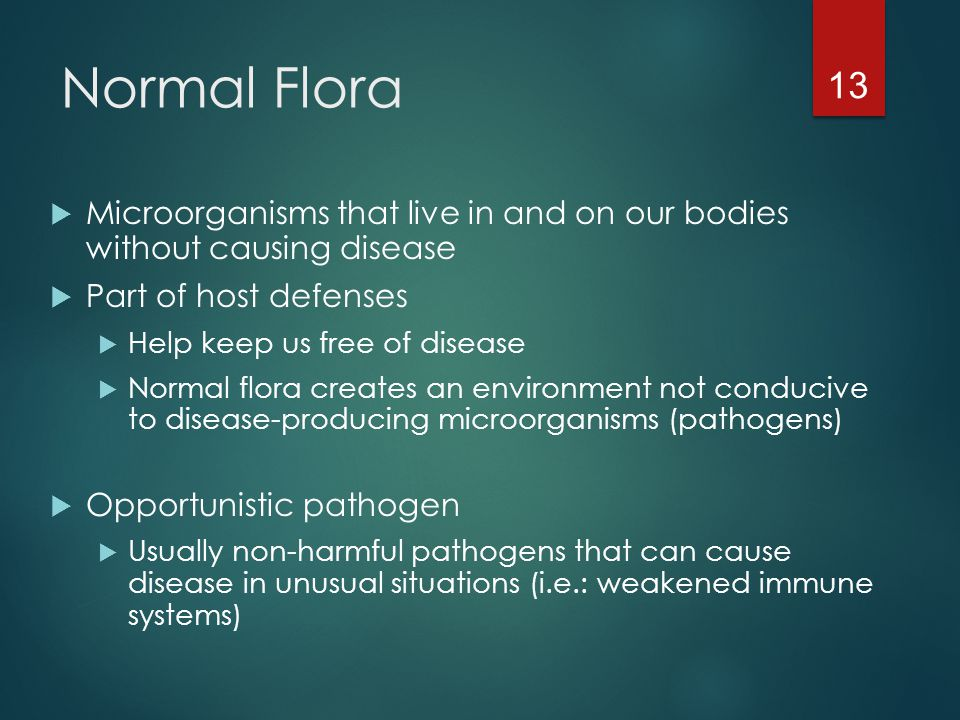 Normal Flora Microorganisms that live in and on our bodies without causing disease. Part of host defenses.