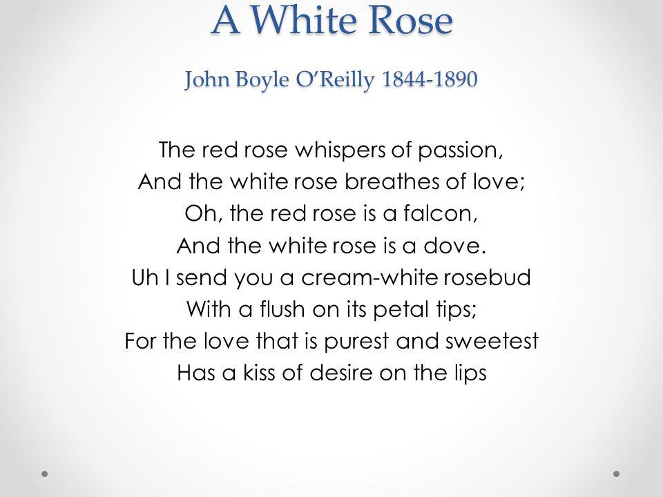 A White Rose John Boyle O'Reilly 1844-1890