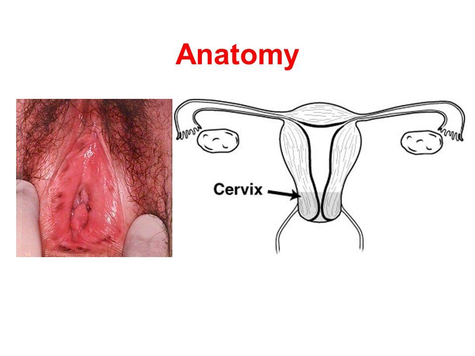 Anatomy Keep in mind the basic anatomy of the vulva.