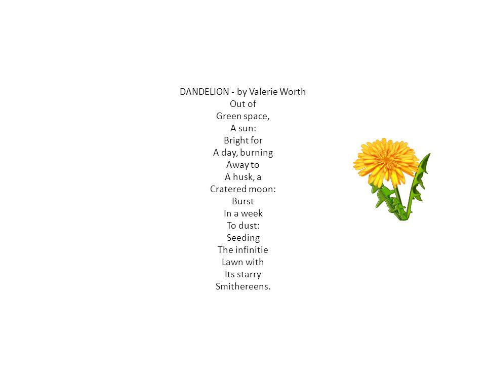 DANDELION - by Valerie Worth