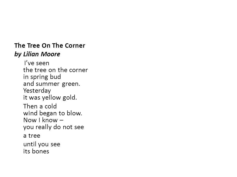 The Tree On The Corner by Lilian Moore.