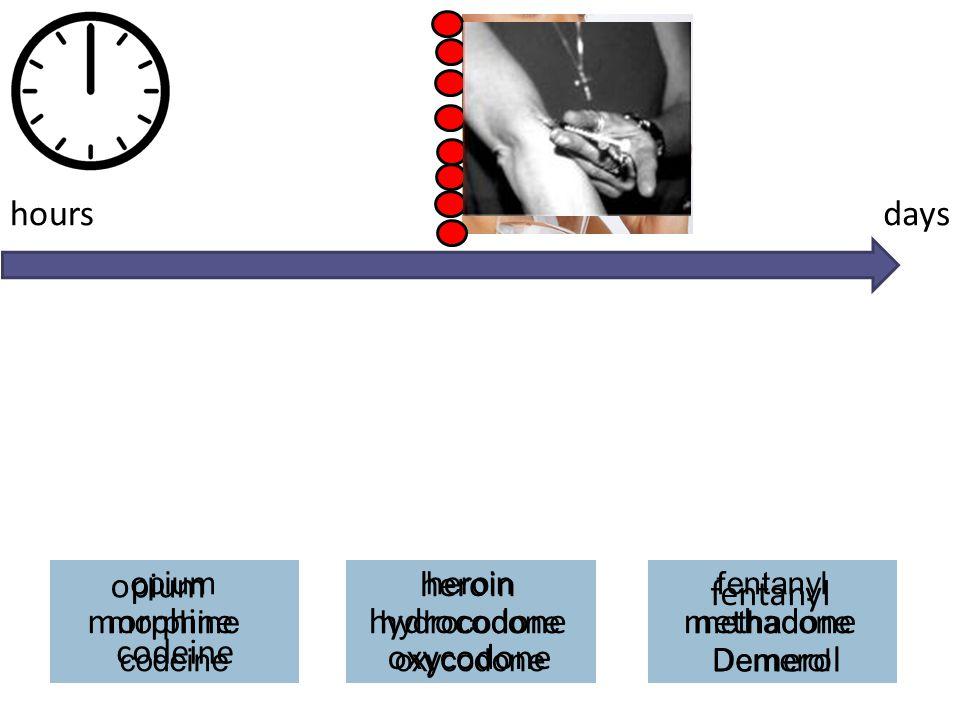 hours days opium heroin fentanyl morphine hydrocodone methadone