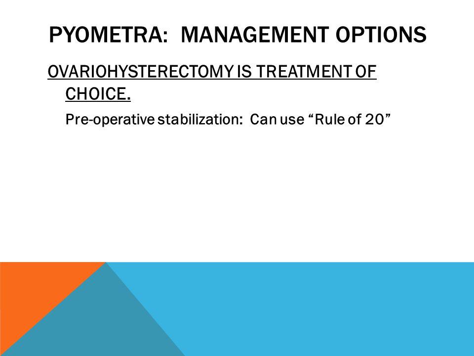 Pyometra: Management Options