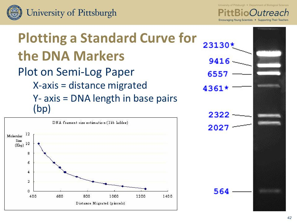 High-Resolution Melting Curve Analysis of Genomic and Whole-Genome Amplified DNA