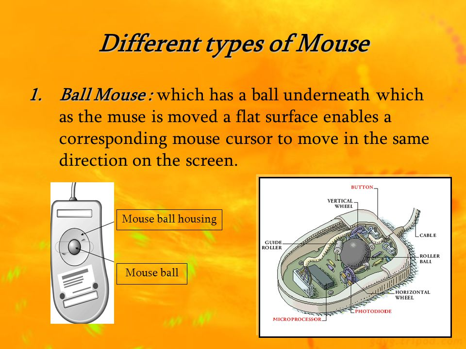 Different types of Mouse