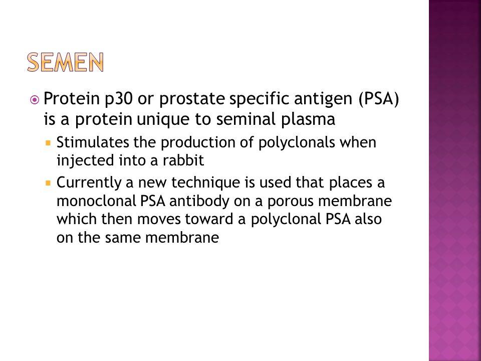 Semen Protein p30 or prostate specific antigen (PSA) is a protein unique to seminal plasma.