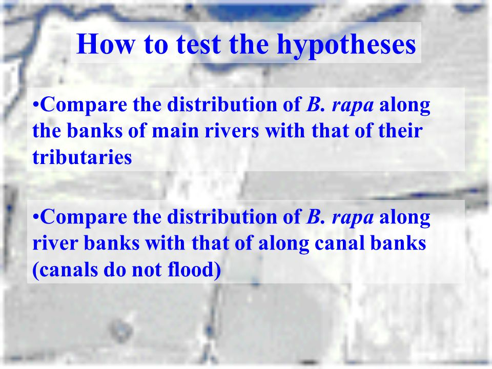 How to test the hypotheses