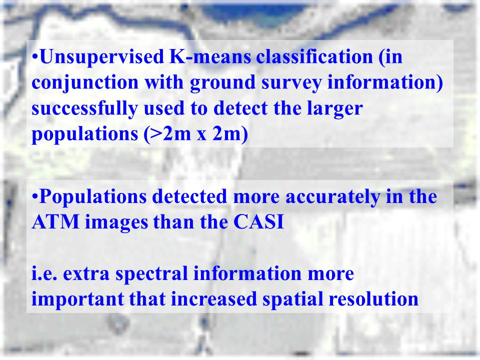 Unsupervised K-means classification (in conjunction with ground survey information) successfully used to detect the larger populations (>2m x 2m)