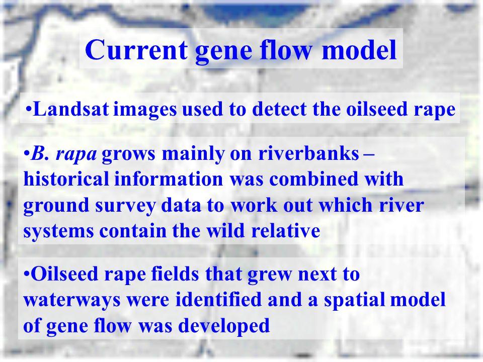 Current gene flow model
