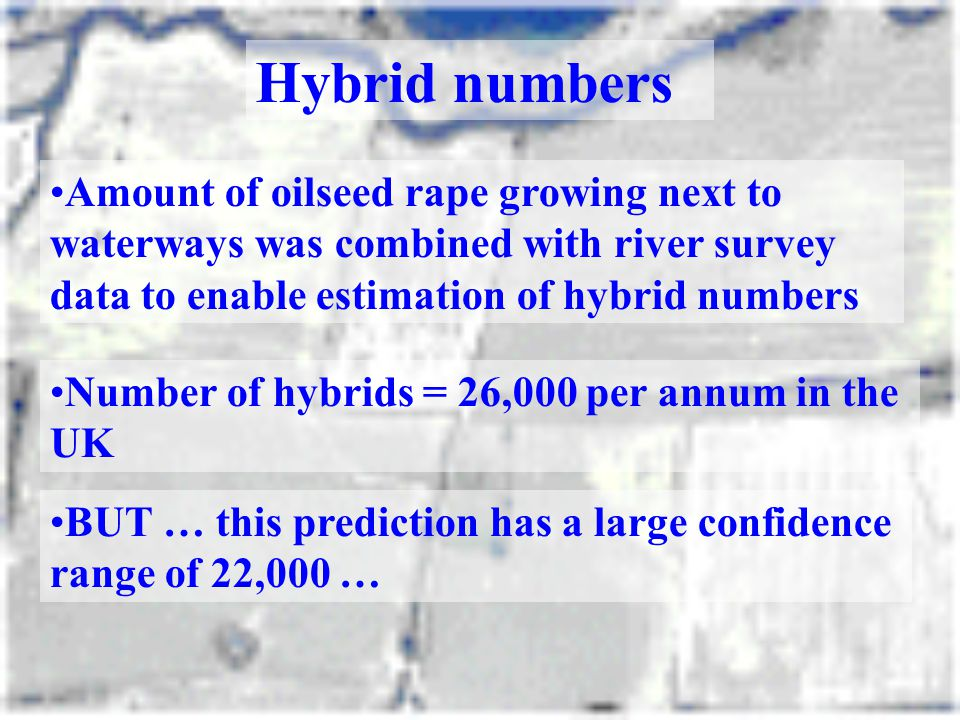 Hybrid numbers Amount of oilseed rape growing next to waterways was combined with river survey data to enable estimation of hybrid numbers.