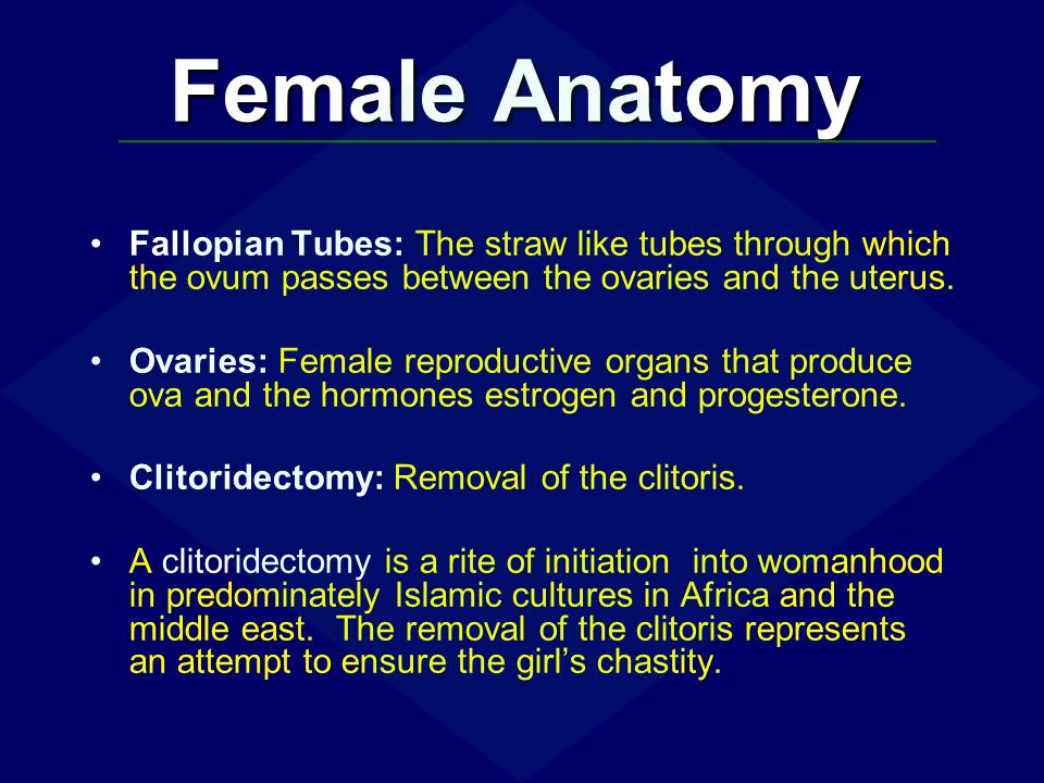 Female Anatomy Fallopian Tubes: The straw like tubes through which the ovum passes between the ovaries and the uterus.
